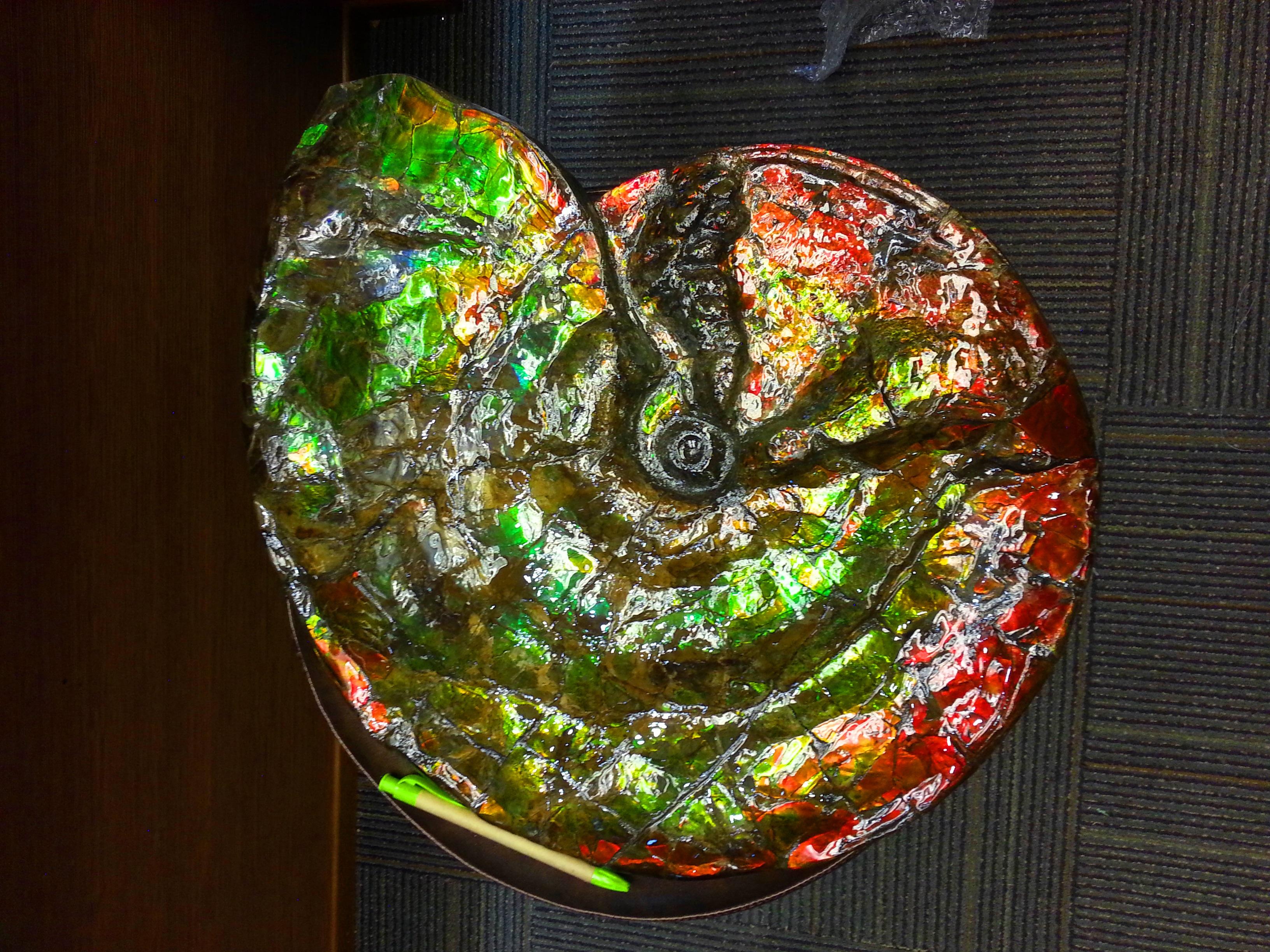 canadian ammonite in singapore crystals and gemstones
